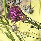 Owl's Clover (Orthocarpus tenuifolius) by carol selchert