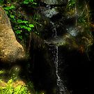 Water Stream of Sequoia by HeavenOnEarth