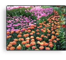 Pink and Orange Tulips - Keukenhof Gardens, Netherlands Canvas Print