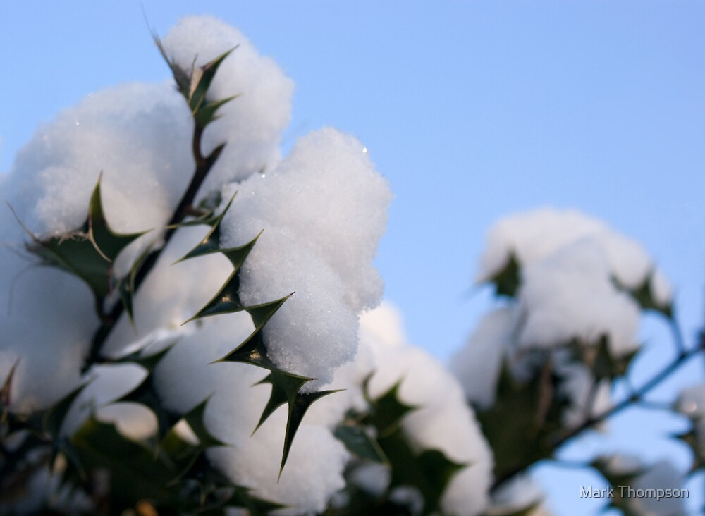 Snow topped holly by Mark Thompson