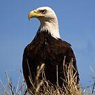 Eagle Eye by Stan Wojtaszek