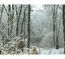 Snow Comes to the  Little Pond  Photographic Print