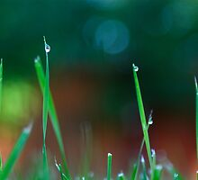 Morning grass by tevamana