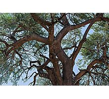 Tree in Gingin Western Australia Photographic Print