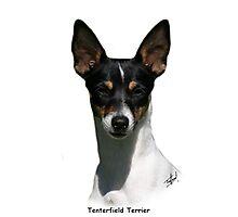 Tenterfield Terrier Photographic Print