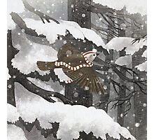Winter Bird  Photographic Print