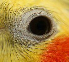 Birds Eye by Adam Evans