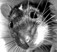 Rat  by CharlieFulluck