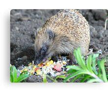 I'm A Hungry Hog - Hedgehog - NZ Canvas Print