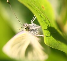 Garden Moth by Adam Evans