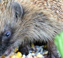 I'm A Hungry Hog - Hedgehog - NZ Sticker
