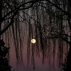 Moon Through Trees by Sarah McTernen