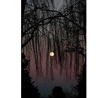 Moon Through Trees Photographic Print