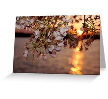 Sunset on the tidal basin Greeting Card