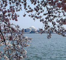 Jefferson Memorial at Cherry Blossom Time by LittleBird