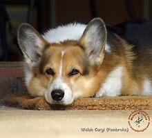 Traffordphotos Dog Breeds Calendar by Traffordphotos