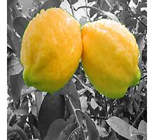 A Beautiful Pair of LEMONS Photographic Print