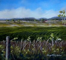 Crops in the landscape.   Toowoomba Australia by sandysartstudio