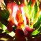 *Avatar - Bulb/corm Flower- Enchanted flowers*