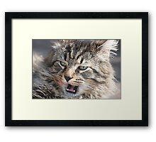 Stray cat. . .  Framed Print
