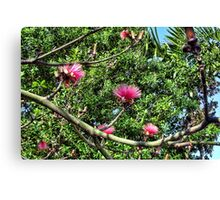 Shaving Brush Tree 7 Canvas Print