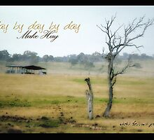 By Day By Day By Day Make Hay © Vicki Ferrari Photography by Vicki Ferrari