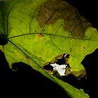 Leaf by BengLim