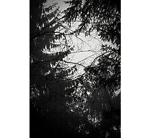Les Étangs Fantomatiques II Photographic Print