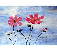 Cosmos flowers in my country Photographic Print