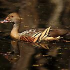 Plumed Whistling-Duck by Margot Kiesskalt