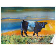 Belted Galloway Cow At The Beach Poster
