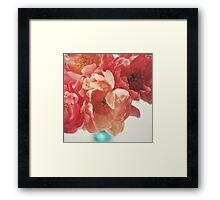 Paeonia #5 Framed Print