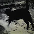 _feline mouvement _ by Louise LeGresley