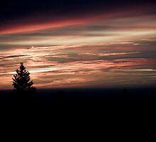 The Twilight Hours VIII by rholala