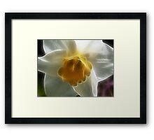 Spring Daffodil Framed Print