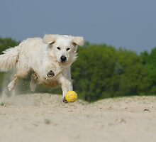 Dog Playing by franceslewis