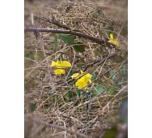 Blooming in a tough environment  Photographic Print