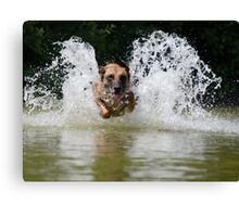 Dog in water Canvas Print
