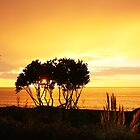 Sunrise in Bay View, NZ by SeeOneSoul