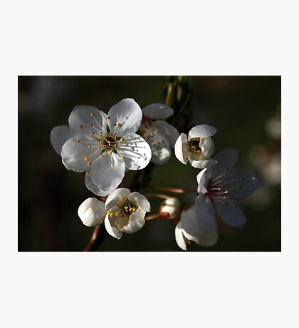A New Season Coming into Bloom Photographic Print