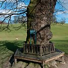 A circular tree bench by EileenLangsley