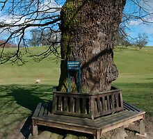 A circular tree bench by EileenLangsley