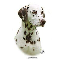 Dalmatian Photographic Print