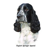 English Springer Spaniel Photographic Print