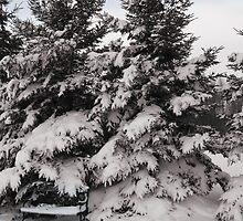 Winter Bench by L J Fraser