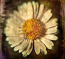 Daisy by David Atkinson