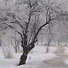 Winter Morning... by tonymm6491