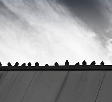 The Pigeon Gang by Paul Davey