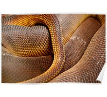 Close-up Detail of Coiled Snake Skin Scales Pattern Poster