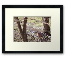 Redwing In The Undergrowth Framed Print